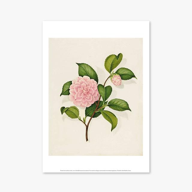 (플라워 아트 포스터) Flower Series ART Poster_1263