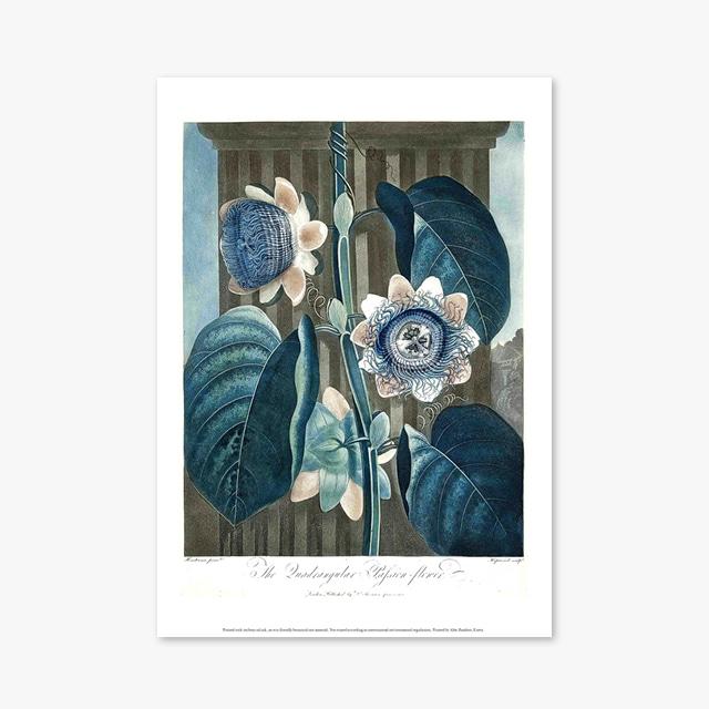 (플라워 아트 포스터) Flower Series ART Poster_1266