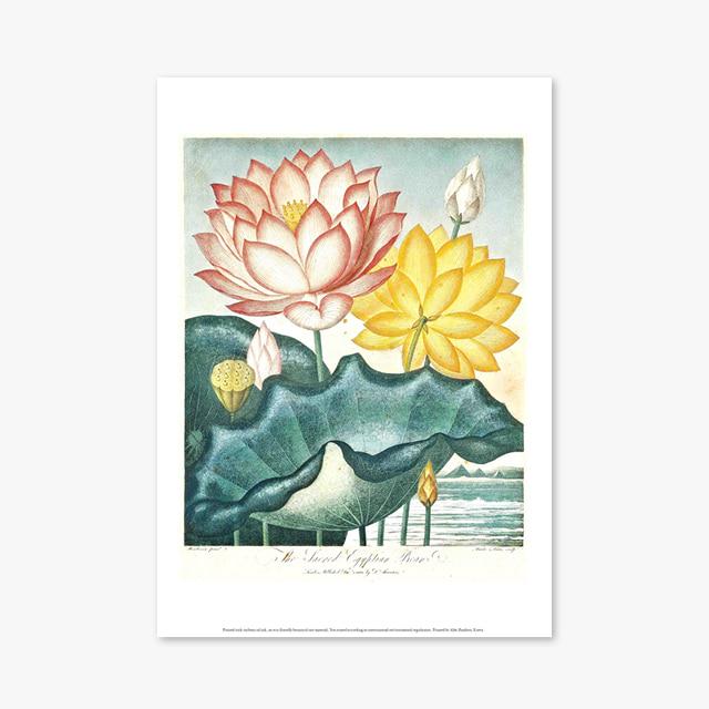 (플라워 아트 포스터) Flower Series ART Poster_1267
