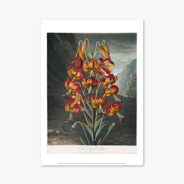 (플라워 아트 포스터) Flower Series ART Poster_1268