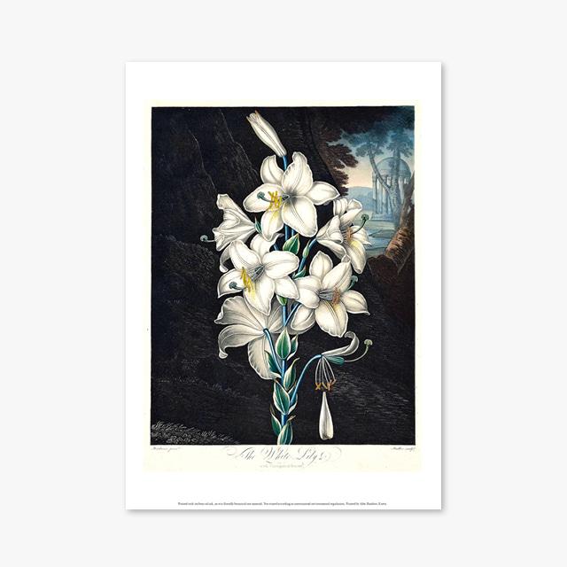 (플라워 아트 포스터) Flower Series ART Poster_1269
