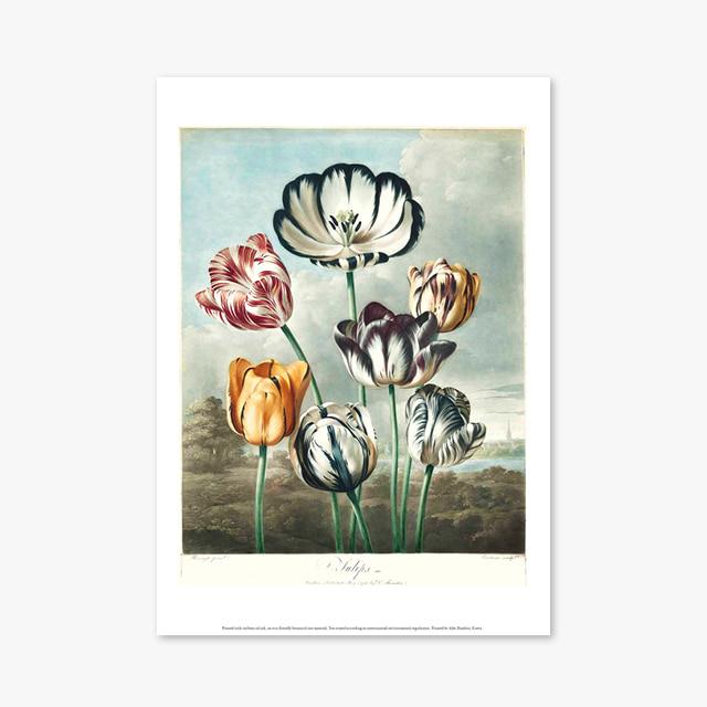 (플라워 아트 포스터) Flower Series ART Poster_1275
